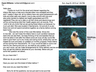 Adorable Ragdoll Kittens for Sale Scam Online