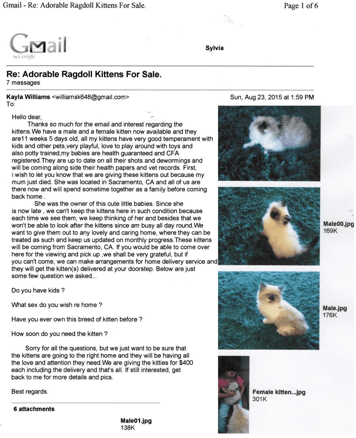 Ragdoll Kitten SCAM
