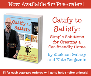 Catify to Satisfy: Simple Design Solutions for Creating a Feline-Friendly Home