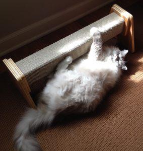 Felix Katnip Tree Company Scratching Beam Product Review and Trigg Ragdoll Cat