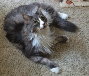 Timmie - Floppycat of the Week