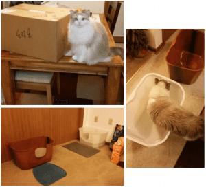 September 2015 NVR Miss High Wall Cat Litterbox Giveaway Winner Reports Back 2