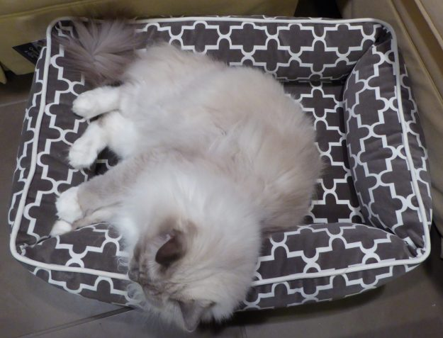 Bowsers Pet Bed Urban Lounger Product Review birds eye view 2