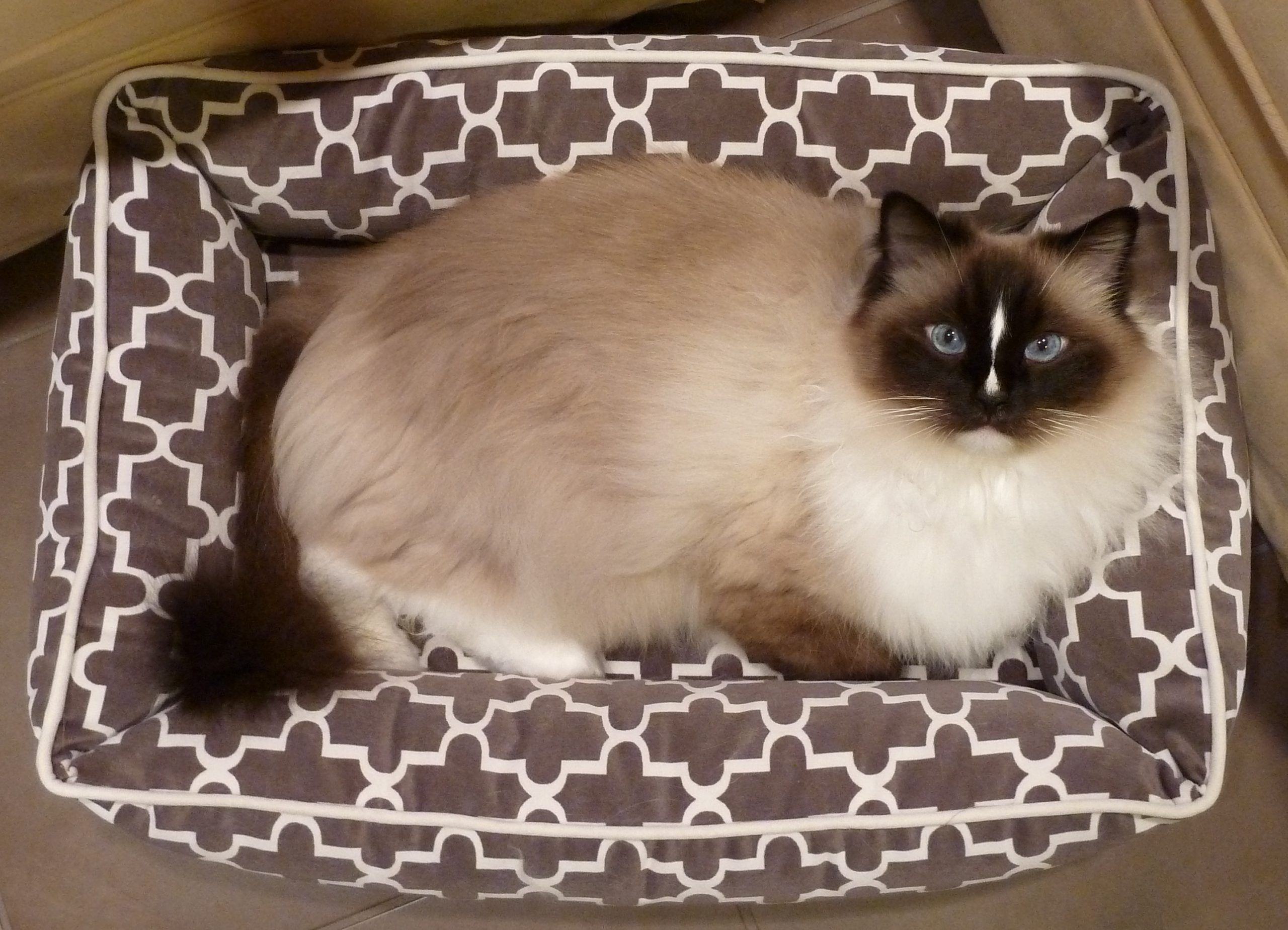 Picture of: Review Bowsers Pet Bed Urban Lounger Product Review