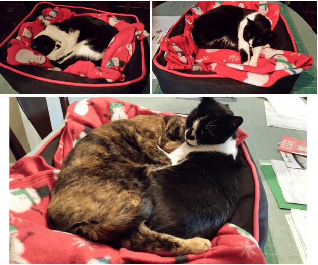 Cat Bed Reviews Dogzilla