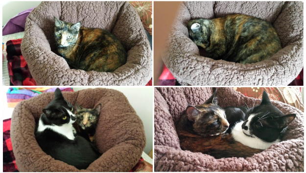 Cat Bed Reviews Urban Paw