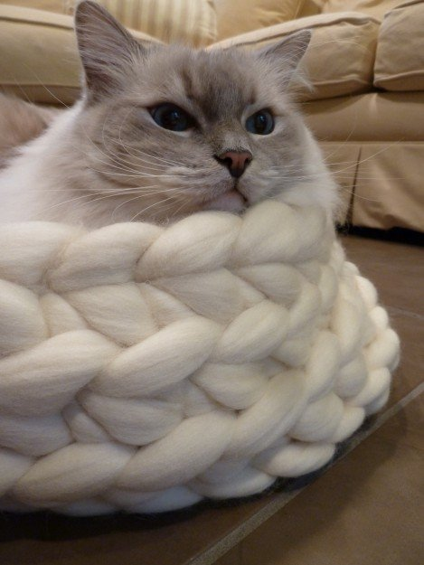 Chunky Knitted Cat Bed from Jennys KnitCo on Etsy Product Review 5