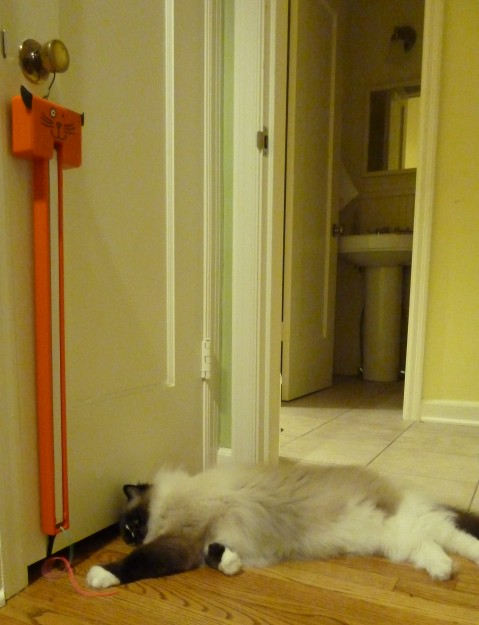 Moody Pet Fling-Ama-String Electronic Cat Toy Product Review 2