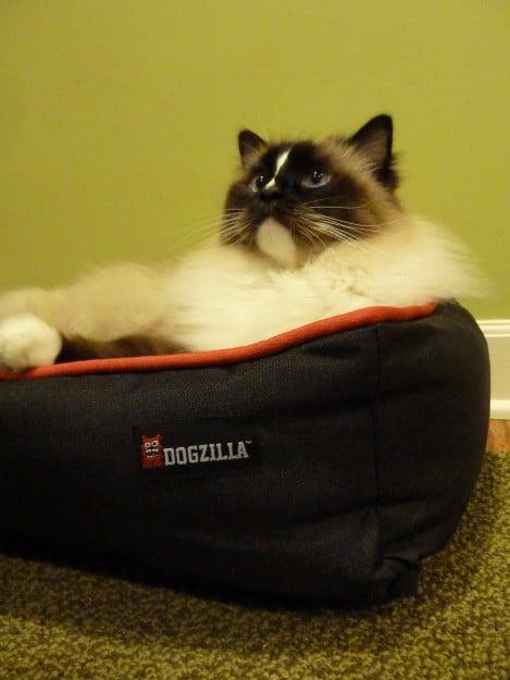 Petmate Dogzilla Rectangular Lounger Pet Bed Product Review