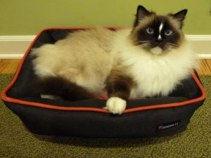 Petmate Dogzilla Rectangular Lounger Pet Bed Product Review with Ragdoll Cat Charlie