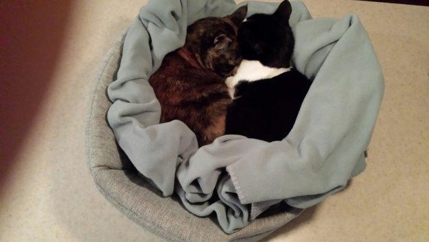 Urban Paw Jumbo Milo 2-in-1 Cat Bed