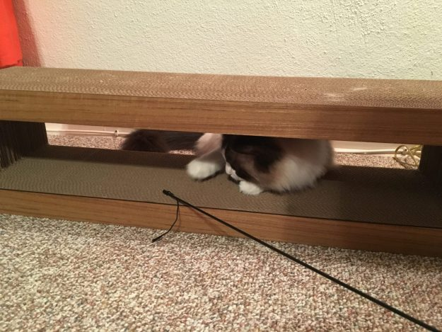 Katris Cardboard Cat Scratcher Covers Product Review 3