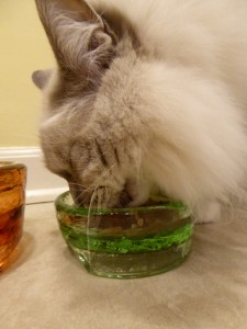 PawNosh Cubby Mini Glass Bowl Product Review Whiskers