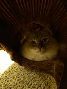 Cat Play Tunnel System - UJI Neko Pawdz Cat Tunnel System Product Review 3