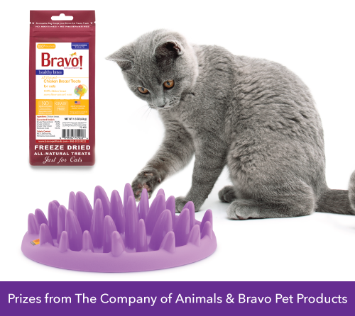 BONUS Giveaway GREEN Cat Catch Feeder and Bravo Treats