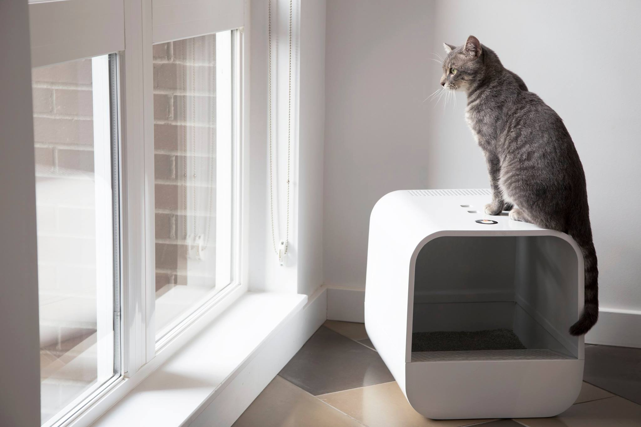 grand poobox modernstyle covered litter box kickstarter campaign - grand poobox modernstyle covered litter box kickstarter campaign