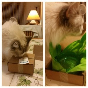 PawNosh Mini Cubby Bowl December 2015 Giveaway Winner Reports Back