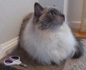 Ragdoll Cats Whisker Wishes Cat Nail Clippers