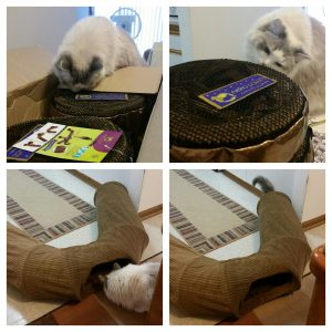 Neko Pawdz UI Cat Play Tunnel System Giveaway Winner 3