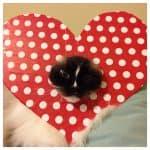 Happy Valentine's Day 2016!