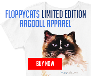Limited Edition Ragdoll Cat - Charlie