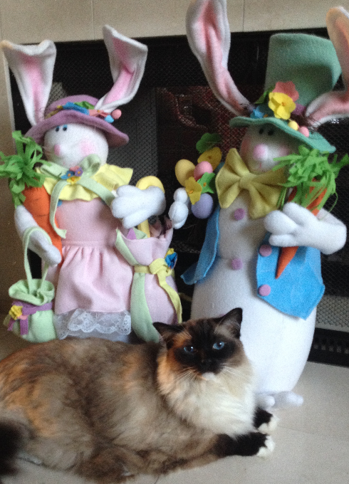 Ragdoll Cat Caymus Happy Easter Bunny 2016 1