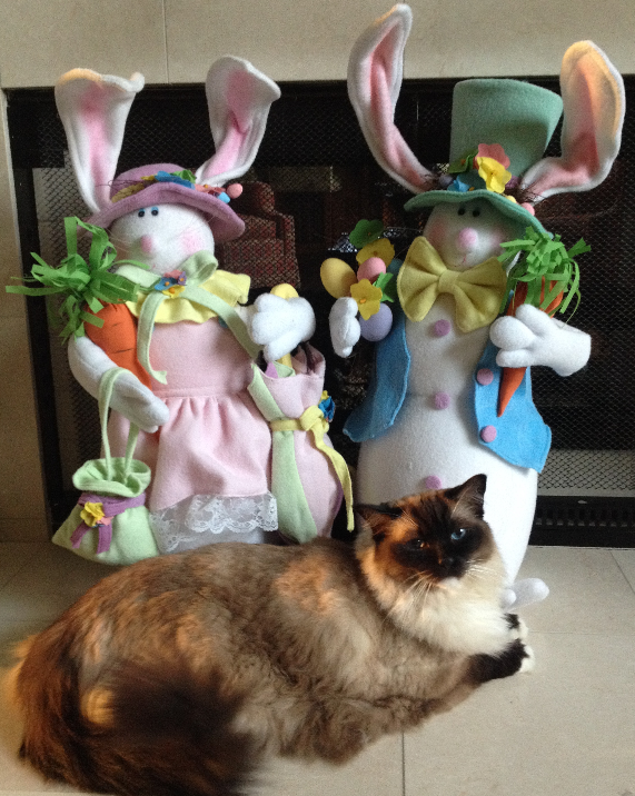 Ragdoll Cat Caymus Happy Easter Bunny 2016 2