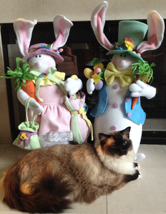 Ragdoll Cat Caymus Happy Easter Bunny 2016 3