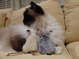 Whisker Wishes Pet Toy Mouse Product Review