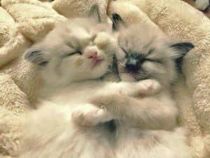 Fifi and Kimberly Sister Snuggles