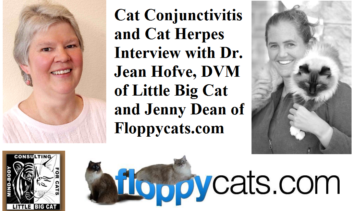 Cat Conjunctivitis and Cat Herpes with Dr. Jean Hofve