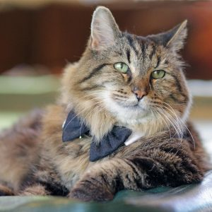 Corduroy - Guinness World Records Oldest Living Cat - Interview with Corduroys Mom Photo taken by Jodi Schneider McNamee 11-2015 2