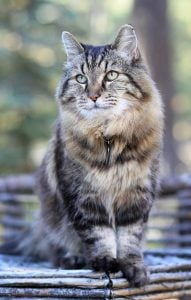 Corduroy - Guinness World Records Oldest Living Cat - Interview with Corduroys Mom Photo taken by Jodi Schneider McNamee 112015