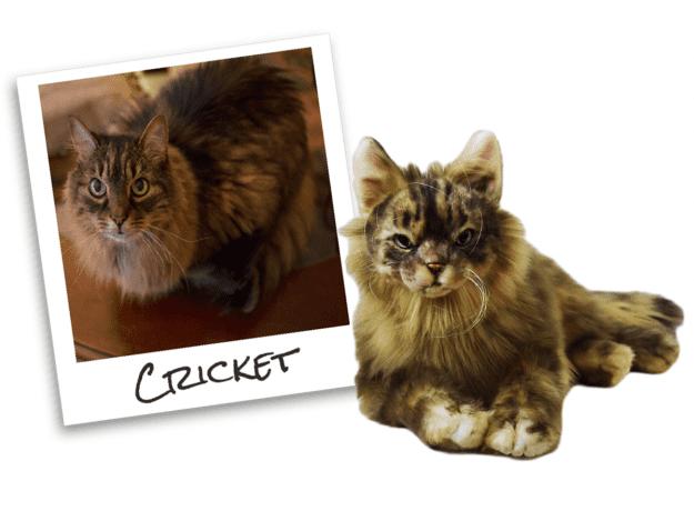 Coupon Code for a Plush Cuddle Clone CricketComparison
