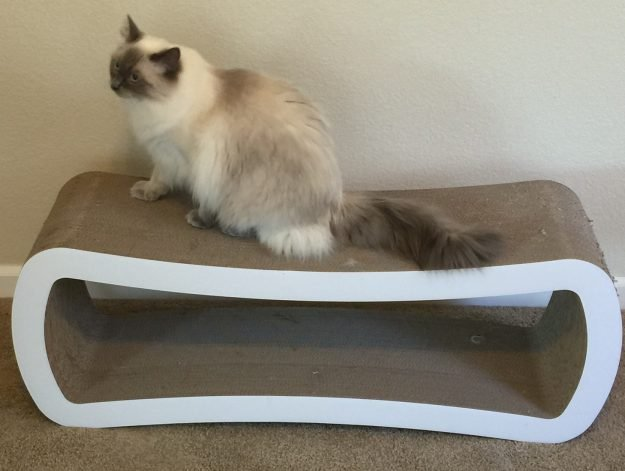 Reader Cat Product Review PetFusion Jumbo Cat Scratcher Lounge 6