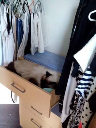 milady in the drawer