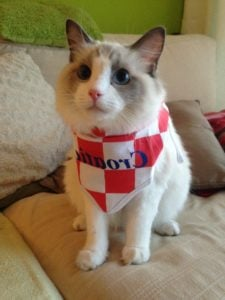 Jeremy - Ragdoll of the Week (4)