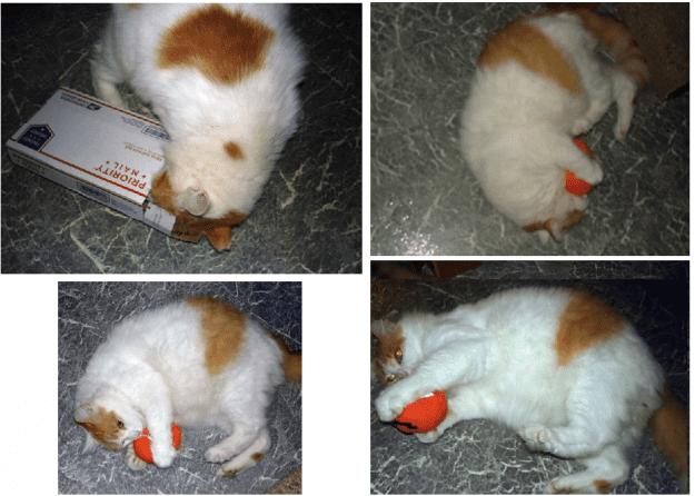 another-bonus-giveaway-winner-of-yeowww-halloween-pumpkin-catnip-toy-reports-back