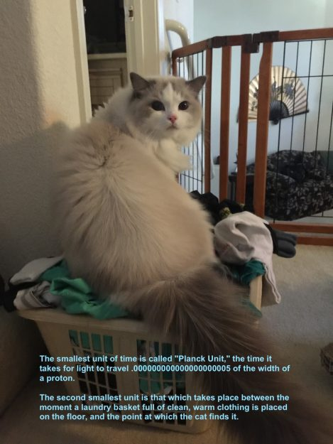 Higgs – Ragdoll of the Week