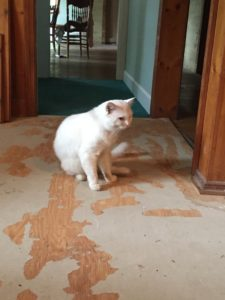 cuddles-ragdoll-of-the-week-abandoned-house