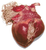 Heartworms in Cats