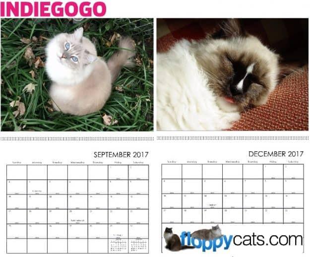 floppycats-indiegogo-2017-calendar-perk