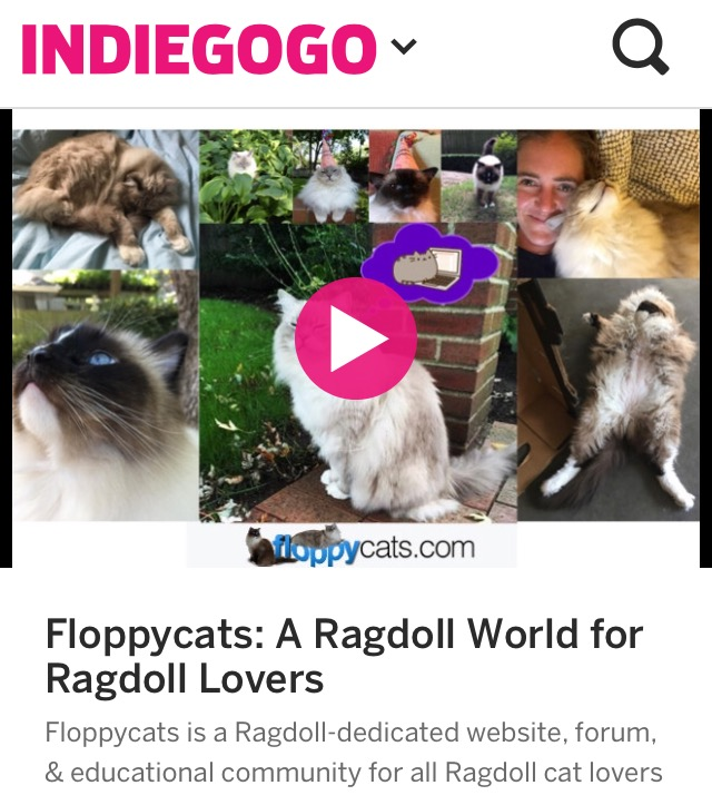 Floppycats Ragdoll Cat Blog Indiegogo Campaign Video
