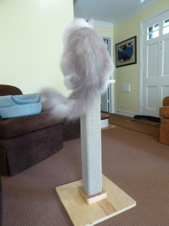 felix-katnip-tree-company-tall-cat-scratching-post-product-review-trigg
