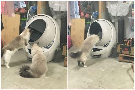 how-cats-react-to-litter-robot-open-air-litter-robot