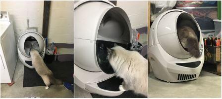 how-do-cats-react-to-litter-robot-open-air-litter-robot