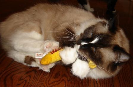 Ragdoll Cat Murphy kicking a yeowww catnip banana