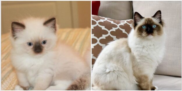 Dean Merlin Winchester of Rags2Riches - 8 mos old Seal Mitted loved by Theresa IMG_2147