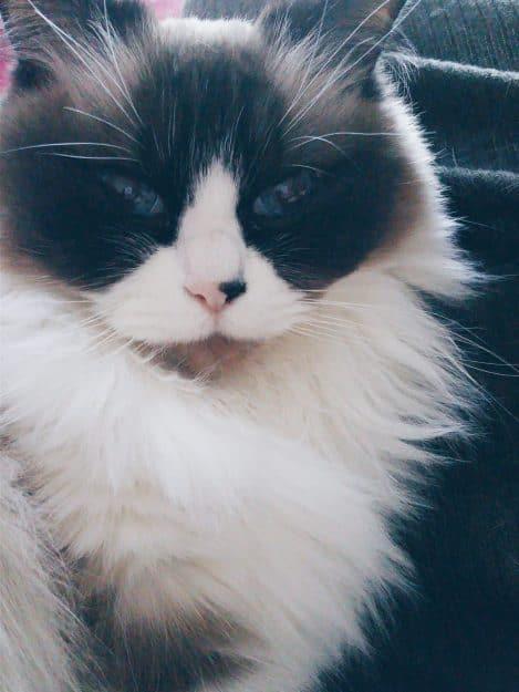 Freyja - Floppycat of the Week