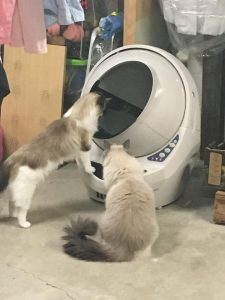 Litter Robot Open Air Review Floppycats Addie and Ash